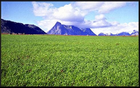 MADP. Farmland in Tasermiut Fjord, South Greenland